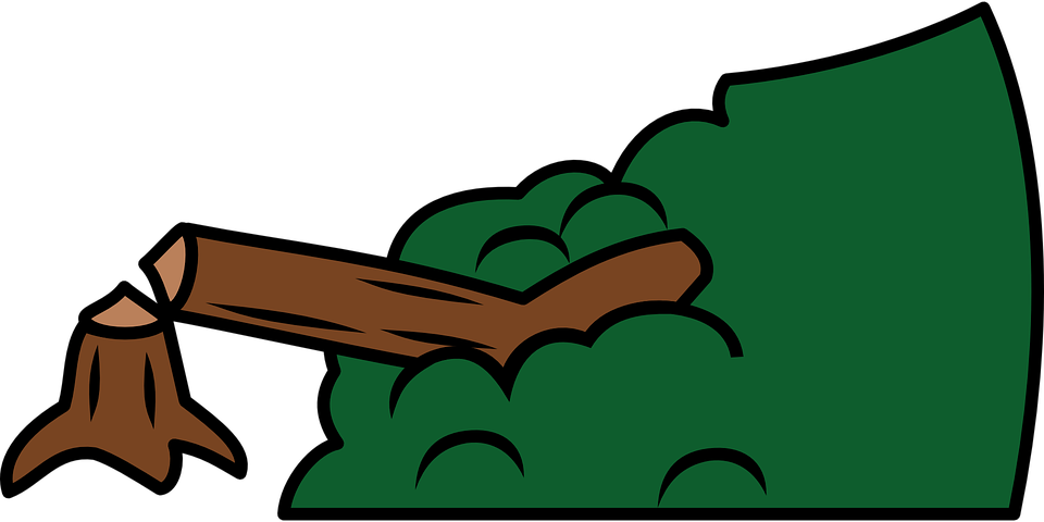 Dozens Of Tree Illegaly Cut Down In Surajpur Wetland Forest Area The best selection of royalty free cartoon cutting down trees vector art, graphics and stock illustrations. dozens of tree illegaly cut down in