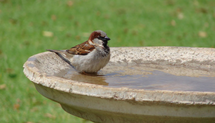 """""""Water for Birds"""" initiative by 'Being Social' to be organized at Tau Devi Lal Biodiversity Park in Gurugram"""