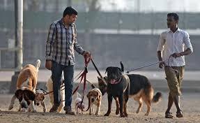 dog register